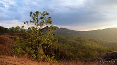 Forest (rafaelgonzalez17) Tags: elsalvador sky sun centroamerica forest sunset sol nature ave ataco lacostadelsol lapaz paz