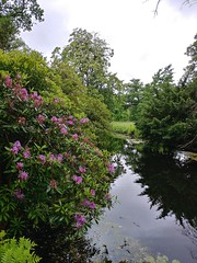 Clingendael Tuin (Elad283) Tags: holland haag hague thehague denhaag netherlands nederland clingendaeltuin japanesetuin clingendael garden japan japanese park reflection