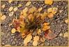 Autumn (ctofcsco) Tags: 1125 85mm aperturepriorityae autumn canon color explored fall geo:lat=3870994955 geo:lon=10513973415 geotagged landscape mountains scenic tellercounty trees co colorado coloradosprings didnotfire ef28300mmf3556lisusm eos50d esplora evaluative explore f110 fallcolor flashoff iso640 photo pic pretty renown superzoom unitedstates usa victor