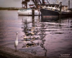 Lonesome Bird on the Dock, Daytona Beach Shores, Florida (PhotosToArtByMike) Tags: daytonabeachshores florida fl bird coastalwaterbird shorebird fishingboat dock boat barrierisland sunrise atlanticocean ocean atlantic surf sea seashore sand beach resort retirementcommunity