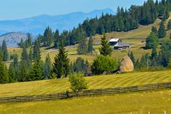 Green Mountain (Robert Bridinel .) Tags: green grass mountain fresh nature summer trees pine pines house home romania bridinel robert nikon d7200 tamron 70300 f456