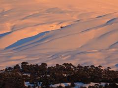 Faldeos del Llaima (Mono Andes) Tags: andes chile chilecentral regióndelaaraucanía atardecer llaima parquenacional parquenacionalconguillío araucaria randonné esquí ski skitour invierno