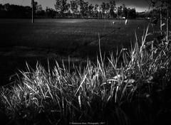 Landscape || Monochrome || Bangladesh || 2017 (Shahnewaz_Khan) Tags: art nature bangladesh canon canon60d landscape landscapephotography catchy landscapephoto canon1022 catchycolors naturephotography fav canonlens canonphotography canonphotos naturelovers dark beautiful beauty beautifulbangladesh beautifulnature beautifulsky black colorplurge daylight dramatic hdr wide wideangle wideanglephotography paddy outdoor outdoorphotography flickr picoftheday green igworlclub night heaven hotshotz hillside photographersofbangladesh photography village view lights lightfantastic morning 50mm 50mm18 composition primelens rice travelphotography travel proig trees ultrawide sunlight sunshine leaves netgeotravel monochrome bnw blackandwhite blackandwhitephoto bnwphotography bnwphotos blackandwhitephotography