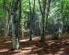 The wood - Laghi di Monticchio (Andrea.Tomassi) Tags: verde wood bosco laghi monticchio bramea sottobosco