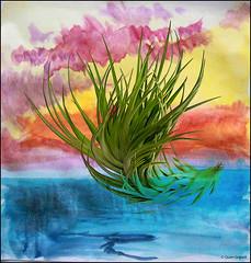 (2601) Tillandsia Montana (Thick leaf) - Air Plant (QuimG) Tags: tillandsias natura nature naturaleza retoc retoque retouch textures quimg quimgranell joaquimgranell tillandsiamontana macro