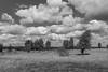 Am Cospudener See (ako_law) Tags: 2470mm 500d baum bäume canon canonef2470mmf4lisusm canoneos500d cospudenersee cossi ef2470mmf4lisusm eos500d freistaatsachsen lakecospuden markkleeberg sachsen saxony tree trees deutschland de
