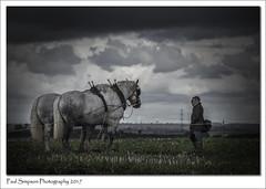 Watching the Horses (Paul Simpson Photography) Tags: paulsimpsonphotography festivaloftheplough animal horse horses bleakweather sonya77 sonyphotography imagesof imageof photoof farming farm lincolnshire admiration nature