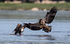 Move Over (kilohotelphoto) Tags: 600mm f4 bald eagles