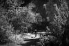 11336_0308 (Torsten Frank) Tags: 02bildobjekt 03landschaften 04menschen 05orte badenwürttemberg baiersbronn baum deutschland fahrrad laub laubbaum mittelgebirge nordschwarzwald pflanze radfahrer radrennen radsport sankenbachsee schwarzwald see sportler votecgravelfondo wasser