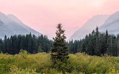 The One That Stands Alone (John Westrock) Tags: landscape nature trees mountains wildfiresmoke sunrise morning haze washington pacificnorthwest hyak snoqualmiepass canoneos5dmarkiii canonef2470mmf28lusm