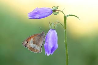 Butterflies loves flowers...