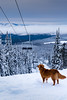 DSC01132.jpg (dikman) Tags: belka bigwhite skiing snow