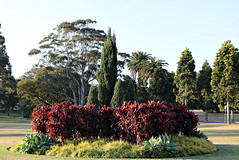 2017 Sydney: A Very Windy Spring Afternoon in Centennial Park #49 (dominotic) Tags: sydney nsw australia newsouthwales 2017 centennialpark publicpark tree green bluesky gardenbed shadow nature springsunset