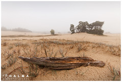 Foggy morning (Peter Halma) Tags: halma photography landscape landschap kootwijkerzand groothoek natuur nature wideangle veluwe fog mist