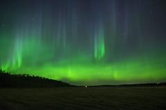The dance (Len Langevin) Tags: auroraborealis northernlights pillars night sky longexposure light naturallight alberta canada nikon d7100 tokina 1116