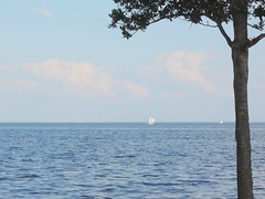 Sailboats on Tampa Bay (pris matic) Tags: tree sailboats blue water sky tampabay stpetersburgflorida stpetersburgfl