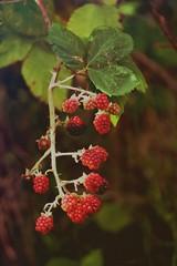 ripe.....?! ( explore )