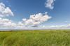 Salzwiesen (juergen.treiber) Tags: salzwiesen sehestedt nordsee jadebusen