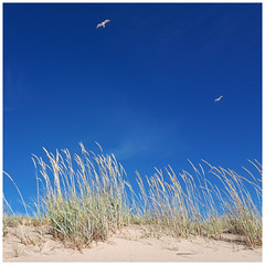 At the beach (explored) (- Man from the North -) Tags: beach dunes sanddune birds sky yyteri pori westcoast finland suomi summer summertime sand reed samsungphone nature naturephotography naturallight beautifulnature