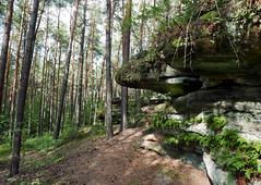 Rock formations in the forest near Krynki (roomman) Tags: 2017 poland świętokrzyskie voivodeship starachowice tree green rock rocks formation formations huge old stone forest krynki