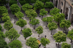 Views from Seville Cathedral (Mark Wordy) Tags: seville sevilla catedraldesevilla sevillecathedral trees courtyard