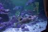 IMG_0695 (10Rosso) Tags: acqua acquario genova pesci pesce mare acquariodigenova aquarium genovaacquarium