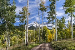*autumn ways* (albert.wirtz) Tags: albertwirtz forest ouray mountsneffelsrange colorado autumn herbst fall autunno autumnmood autumnways yellow aspens snow landscape landschaft ouraycountyroad5 ouraycounty trees bäume ridgway highway550 usasouthwest southwest unitedstates vereinigtestaaten amerika nordamerika northamerica highway62 sanjuanmountains milliondollarhighway