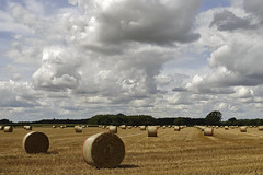 North Tuddenham field [218/365 2017] (steven.kemp) Tags: north tuddenham field crop farm farming moody sky clouds countryside hay bale straw england norfolk landscape harvest