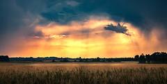 Cinema of mother nature (Tomislav Čar (Tomislaw)) Tags: scouting đurđevečkipesek podravina croatia sand kalinovac zagreb storm clouds sunrays sunset cornfield trees hrvatska đurđevac forest outdoor