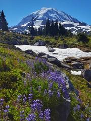 Spray Park, Mount Rainier National Park (Dan Nevill) Tags: wonderland rainier wonderlandtrail mtrainier mountrainier nationalpark backpacking camping trail wilderness alex kieth hiking wildflowers washington pacificnorthwest pnw