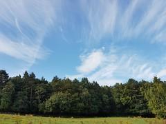 Flying (katy1279) Tags: cloudscirruswispybluedayflying