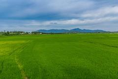 Zelená až to bolí (zcesty) Tags: vietnam9 rýže pole krajina hory vietnam dosvěta khánhhoà vn