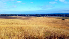 The Slopes of Quail Hill (EmperorNorton47) Tags: cityofirvineopenspacedistrict irvine quailhill california photo digital summer slopes hill meadow grass