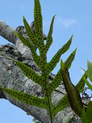 fern spores (treenquick) Tags: seeds spores green sky fern bali plants