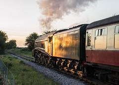 Evening Streak (Tom Watson 70013) Tags: classa4 lner 60009 a4 streak union of south africa steam train nene valley railway nvr pacific castor ferry meadows wansford peterborough straight bank