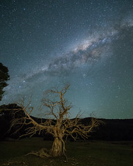 Treebeard under the stars (nightscapades) Tags: act astronomy astrophotography australiancapitalterritory australiancapitalterritoryianwilliams autopanopro canberra ent galacticcore ianwilliams milkyway night nightscapes orroralhomestead orroralvalley pano panorama panos sky stars stitch tree treebeard twilight zodiacallight