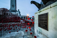 Poppies at the war memorial (NikNak Allen) Tags: plymouth devon hoe plymouthhoe statue installation flowers low morning sunrise plaque concrete plinth light wave poppy poppywave remember remembrance
