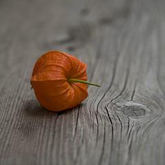 Amour en cage sur un vieux banc **--- ° (Titole) Tags: squareformat physalis amourencage titole nicolefaton wood orange stilllife noeud knot thechallengefactory