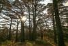 "The Cedars of the Lebanon  (أرز الربّ  / ""Cedars of the Lord"") (Frans.Sellies) Tags: img2313 cedar cedars lebanon libanon"
