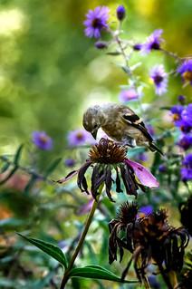 Seed Picker
