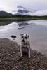 The Canadian Rockies (Following Keaton) Tags: vermilionlakes dog lake landscape nature schnauzer wilderness