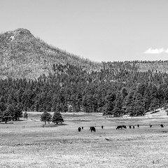 Alpine, AZ (kevin dooley) Tags: alpine az arizona