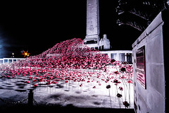 War memorial poppy wave [ Explore ] (NikNak Allen) Tags: plymouth devon hoe plymouthhoe installation lights morning early low art poppies longexposure honour statue history remember remembrance