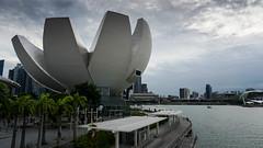 Singapore (dgarcia_) Tags: singapur singapore marina bay gardens by leds lights city sky scratcher rascacielos laser flower dome helix bridge