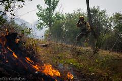 BRIF Tabuyo-32 (PedrodAstorga) Tags: incendio cabrera briftabuyo ume