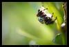 IMG_4765 (DarKWaRRioR4012) Tags: araignée saltique vernot macro côtedor bourgogne