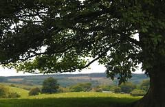 Never be in a hurry (Lancashire Lass :) :) :)) Tags: tree grass field meadow sheep shadow fell farm longridgefell hurstgreen lancashire countryside landscape oak august summer
