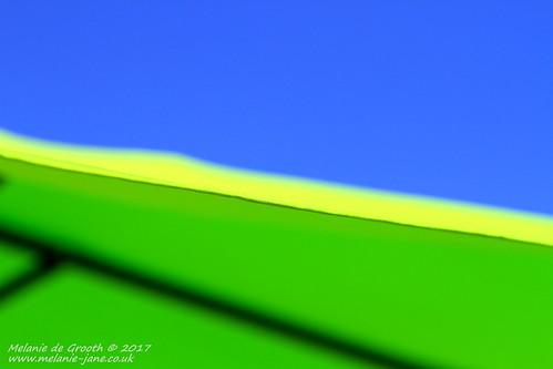 Green Umbrella 3