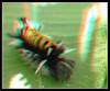 Milkweed Tussock Moth Caterpillar, Euchae Egle Up Close - Anaglyph 3D (DarkOnus) Tags: milkweed tussock moth caterpillar euchae egle up close pennsylvania buckscounty panasonic lumix dmcfz35 3d stereogram stereography stereo darkonus closeup macro insect anaglyph
