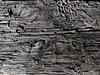 木 WOOD (SHIBATA KEN) Tags: japan 日本 tokyo 東京 texture テクスチャー wood 木